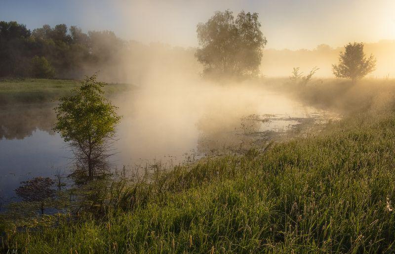 утро, туман, Туманное утро, свет, озеро, травы, лето, тепло, light, colors, Summer, morning, foggy, natural light, Misty, fog, sunlight, warm,  волшебный свет ..photo preview
