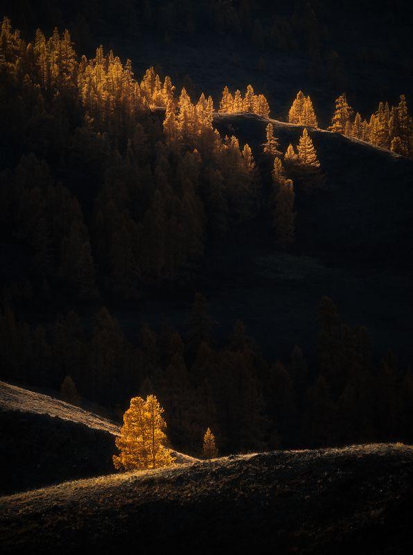алтай, пейзаж, осень В свете осени...photo preview