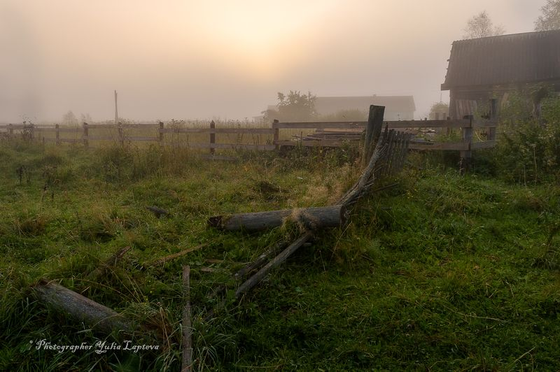 природа,утро,ленинградская область,туман,россия \