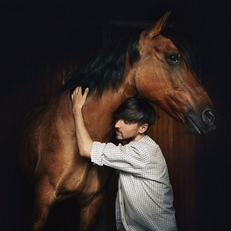 портрет, лошадь ***photo preview