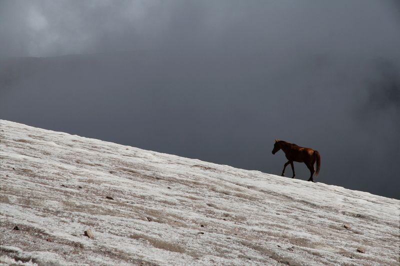 лошадь, ледник, горы, казбек, грузия, horse, glacier, mountains, kazbek, georgia, альпинизм, mountaineering Одинокая лошадьphoto preview