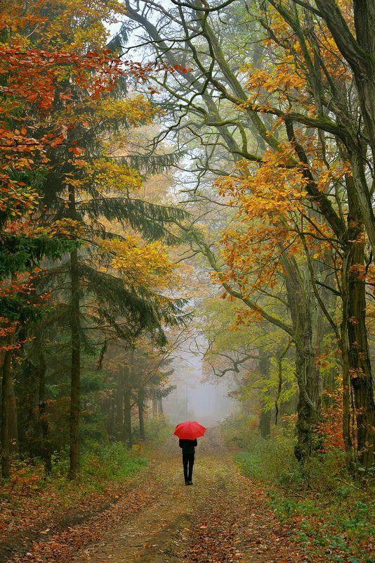 autumn walk fall magic trees path mist foggy dranikowski forest alone Autumn walkphoto preview