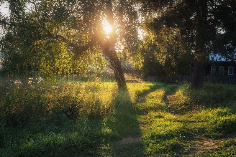 лето, береза, дерево, вечер, деревня, дорога, луг. Теплый летний вечер на окраине деревниphoto preview