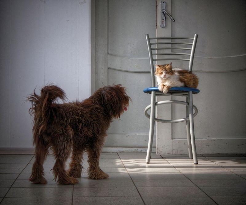 кот, собака, кошка, стул, сон, коты a strange dreamphoto preview