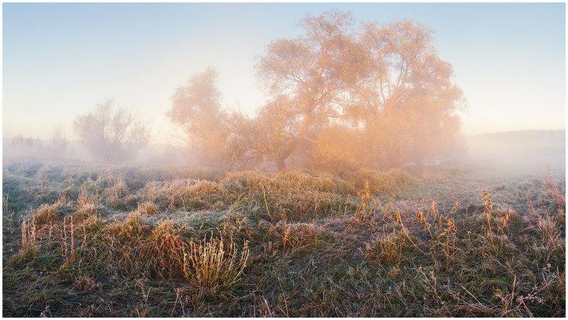 утро, туман, рассвет, осень, заморозок, изморозь, луг Осеннее утроphoto preview