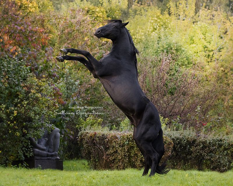 horse, лошадь, лошади, portrait expressivephoto preview