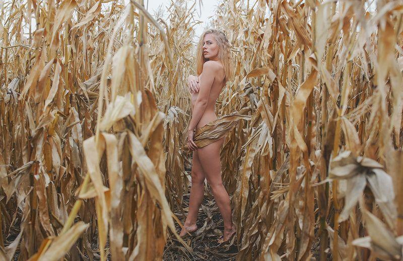 Кукурузное полеphoto preview
