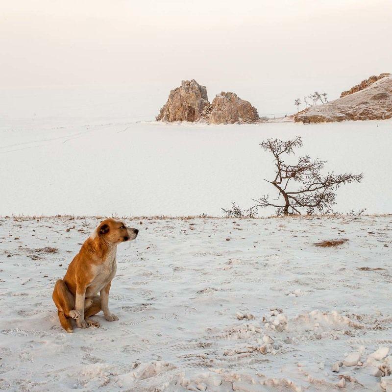 Байкал, зима, лед, Шаманка, Бурхан, собака Байкал. Шаманка.photo preview
