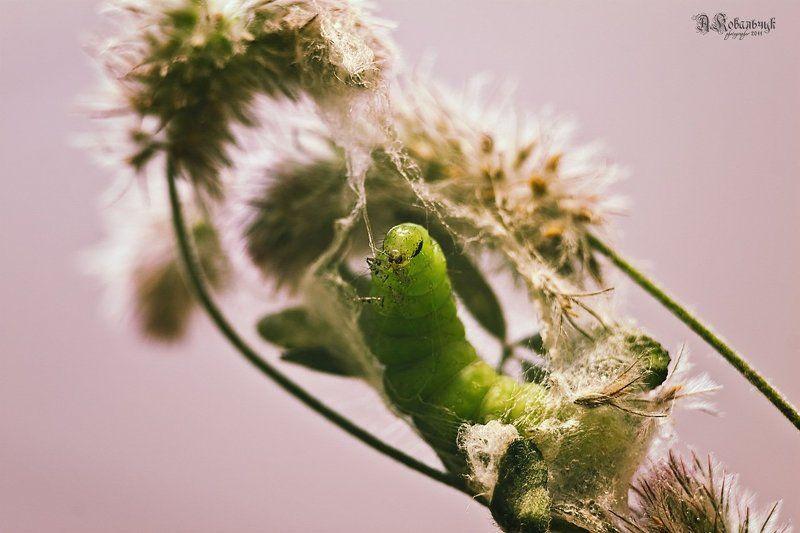гусеница, бабочка, метаморфоза,кокон, паутина Рождение Бониphoto preview