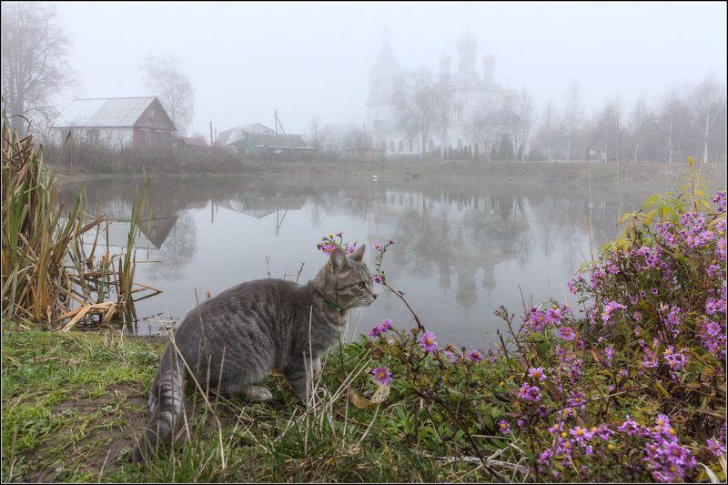 россия, московская обл, жестылёво Тот, кто сидел в кустахphoto preview