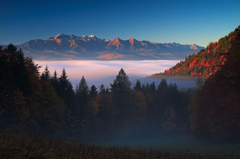 tatras, mountains, morning, autumn, trees, fog, light From the Szopka passphoto preview
