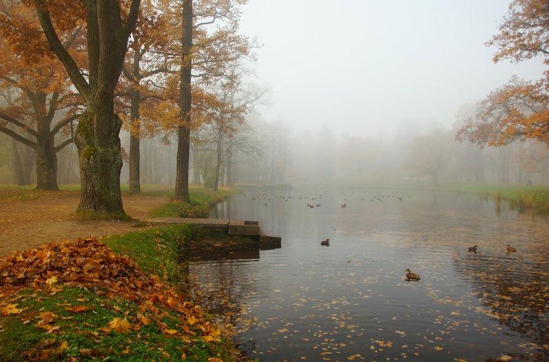 утро, озеро, пруд, вода, туман, утка, природа, тишина, птица, берег, настроение, тишина, пейзаж, прогулка, грусть, дерево, morning, lake, pond, water, fog, duck, nature, silence, bird, shore, mood, silence, landscape, walk, sadness, tree Autumn morning...photo preview