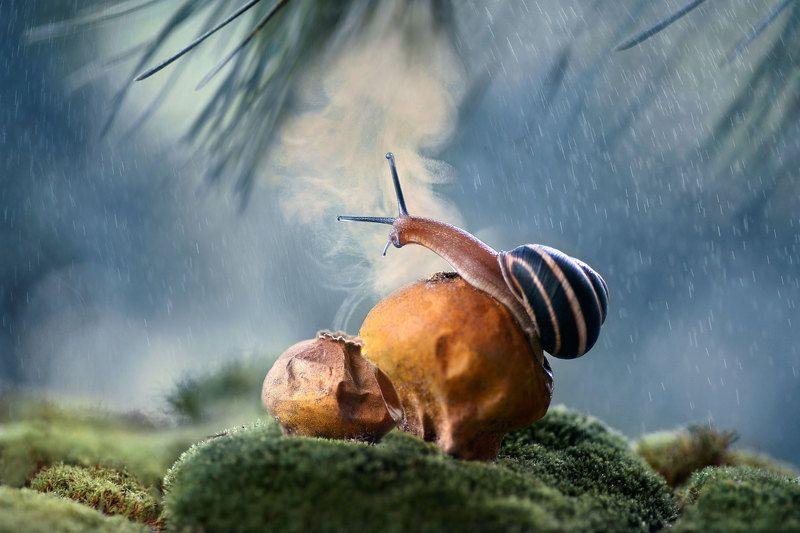 улитка, макро, споры, грибы, дождевик, природа photo preview