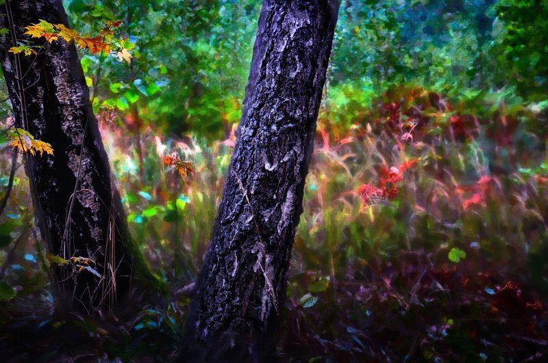 осень, березы, цвета, природа Осень к двум березамphoto preview