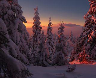 Легенды зимнего леса