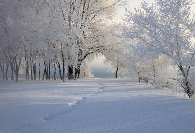 сибирь, зима, снег, мороз, томь, новокузнецк, иней Аркаphoto preview