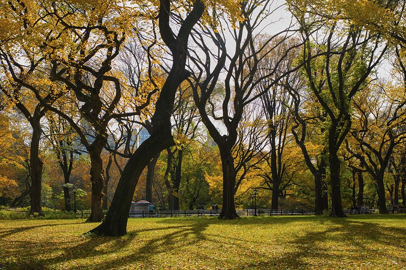 Central Park Jazzphoto preview