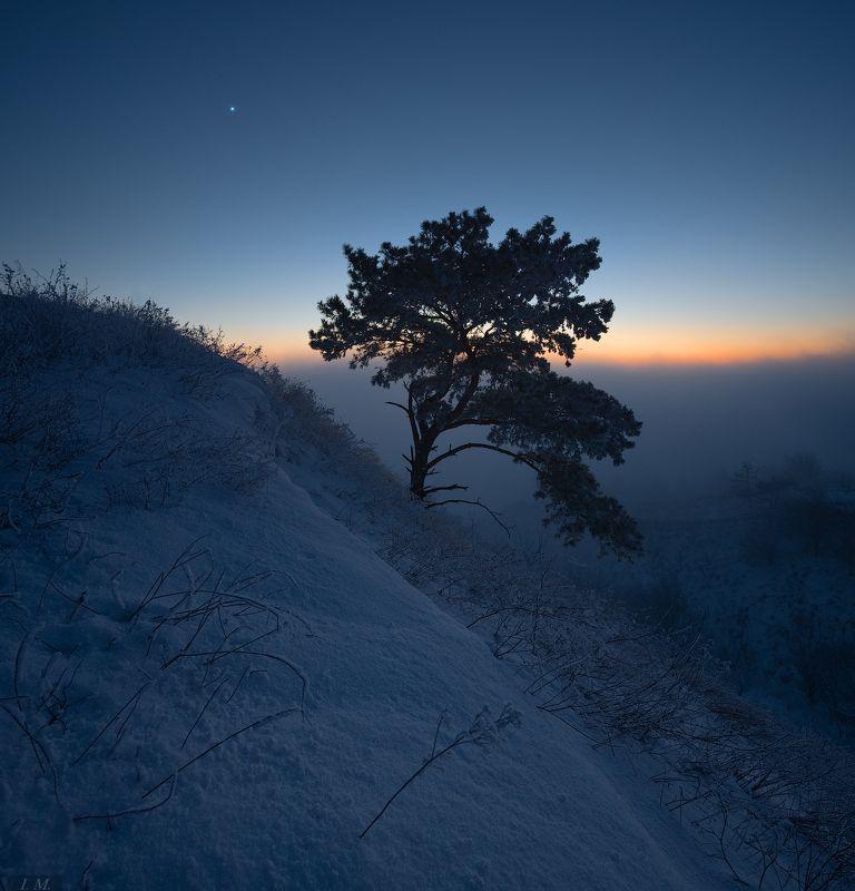 вечер, зима, мороз, снег, сосна, туман, холмы, холод, венера, вечерняя звезда, cold, evening, fog, landscape, light, mood, nature, panorama, sky, winter, misty, colors, star, venus, pine tree Blue Silencephoto preview