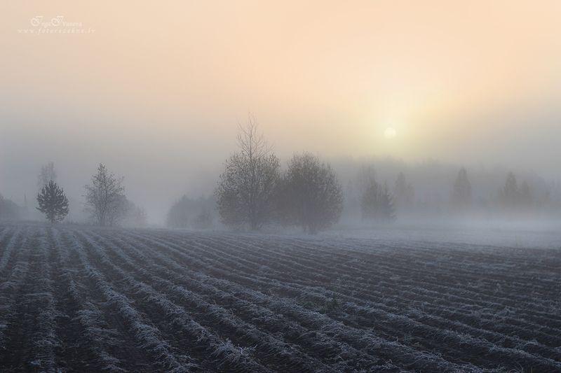 морозное утро Морозное утроphoto preview