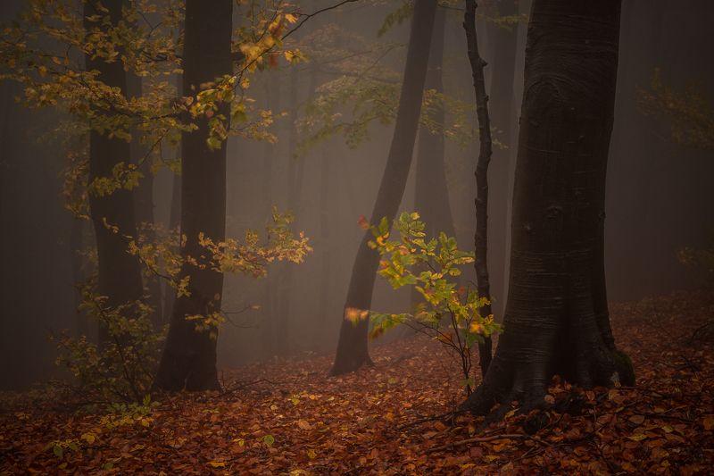 Осень в горах Стара планинаphoto preview