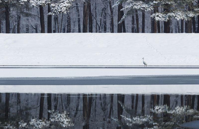 пейзаж#, природа, #фотограф, #г., арсеньев# Нежданный гость.photo preview