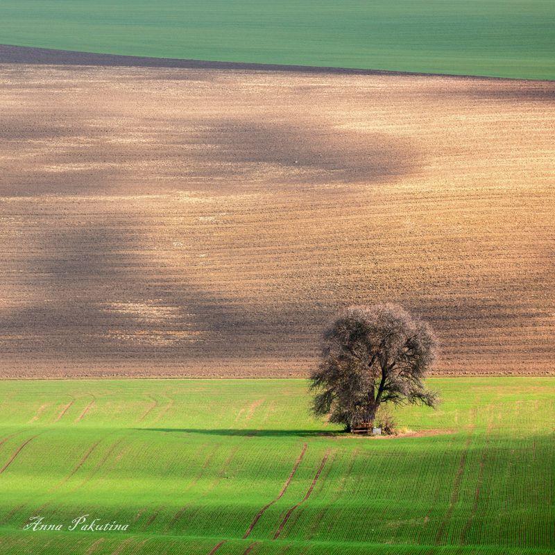Одинокое дерево Моравииphoto preview