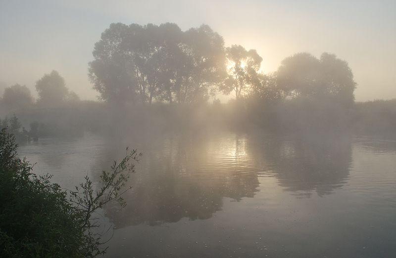 утро, омут, река, упа, першино, пейзаж У речного омутаphoto preview