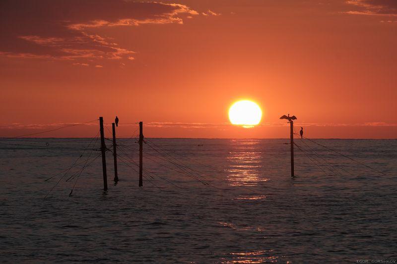 крым,море,утро,рассвет,пейзаж,вода,птицы,палки,бакланы,солнце,восход Восход солнцаphoto preview