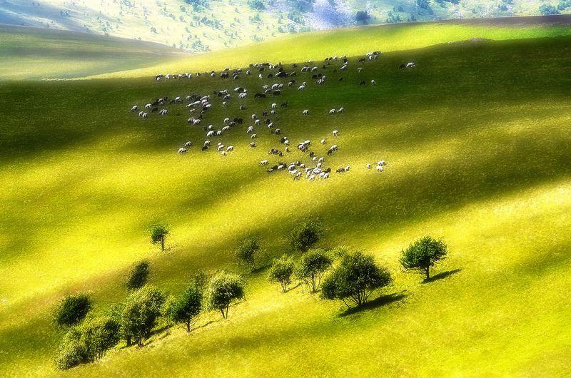 кавказ, пастбища, лето Идиллияphoto preview