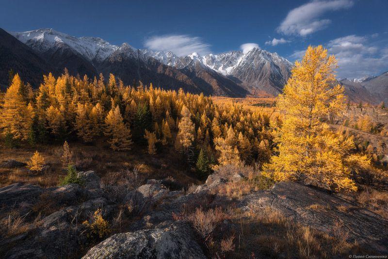 пейзаж, алтай, осень, золото, горы, скалы, лиственница В долине Аргутаphoto preview