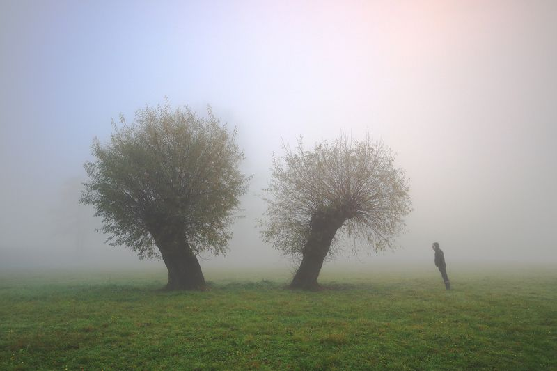 tree, willow, mood, fog, morning, man, Missing elementphoto preview