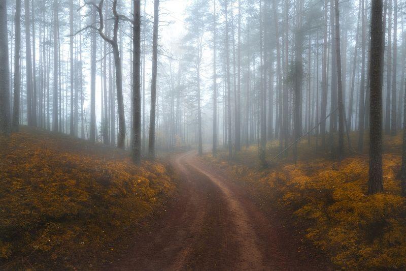 Лес, осень *****photo preview