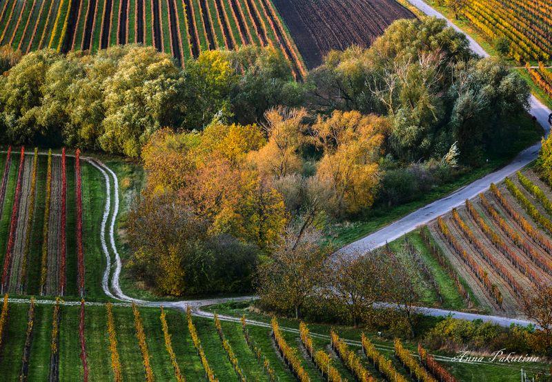 Осень в Моравииphoto preview