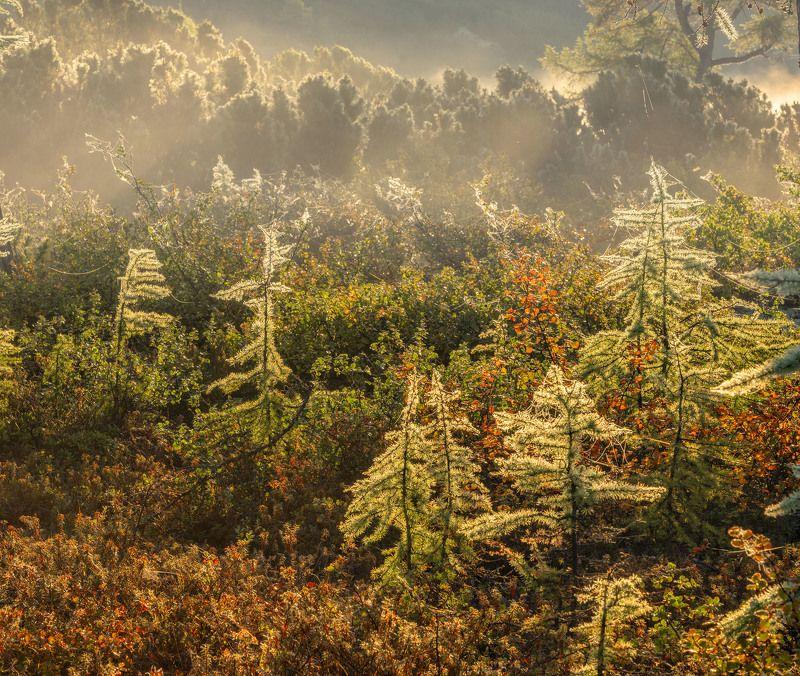 Фототуры с Владимиром Рябковым, Колыма, озеро Джека Лондона. Туман на Косе Биологов.photo preview