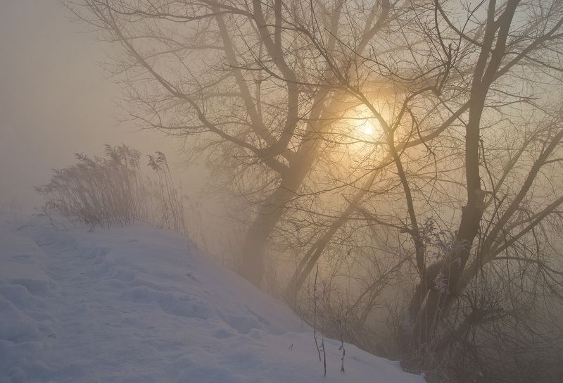 зима, рассвет, природа В холоде и золотеphoto preview