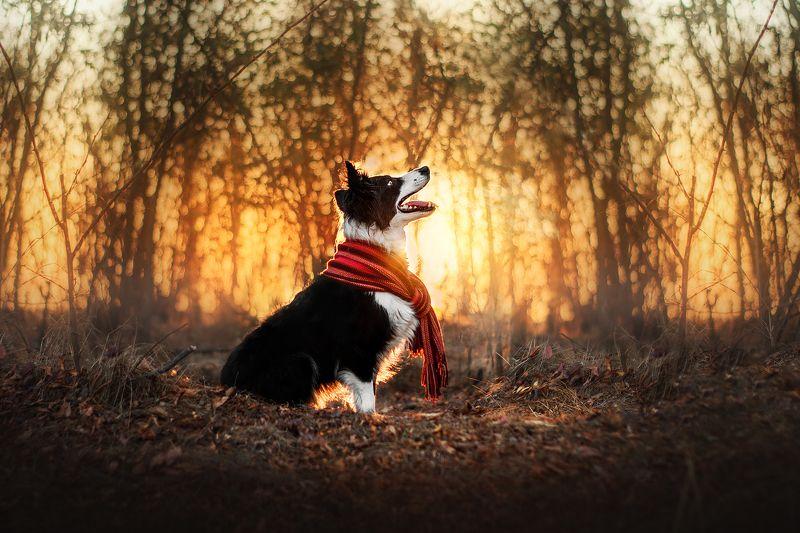 собака, закат, солнце, животные, природа Закатphoto preview