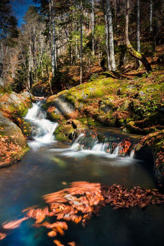 #autumn #bulgaria #national park central balkan Run along the streamphoto preview