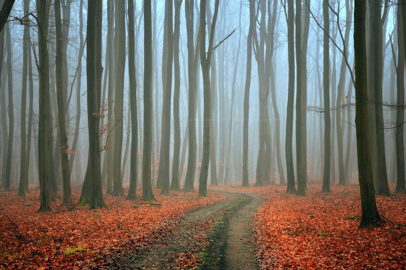 mysterious forest path road autumn fall foggy morning mist dark trees dranikowski magic Mysterious Forestphoto preview