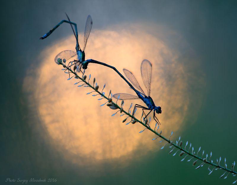 стрекоза, природа, макро, лето, вечер, красиво, украина, крылья, растение, закат Лестница в небоphoto preview