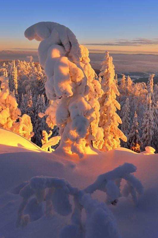 Сияющи снегphoto preview