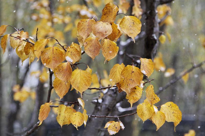 Осень и зимаphoto preview