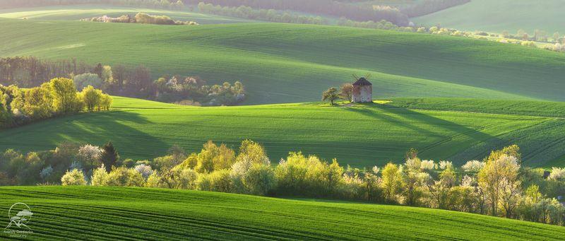 пейзаж, природа, поле, моравия, чехия, мельница \