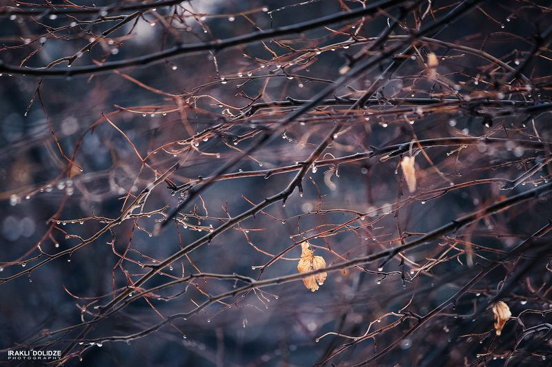 nature, rain, raindrops, macro, autumn, focus, blur, photography, colored, mood, rainy day, love rain, love Rainy Dayphoto preview