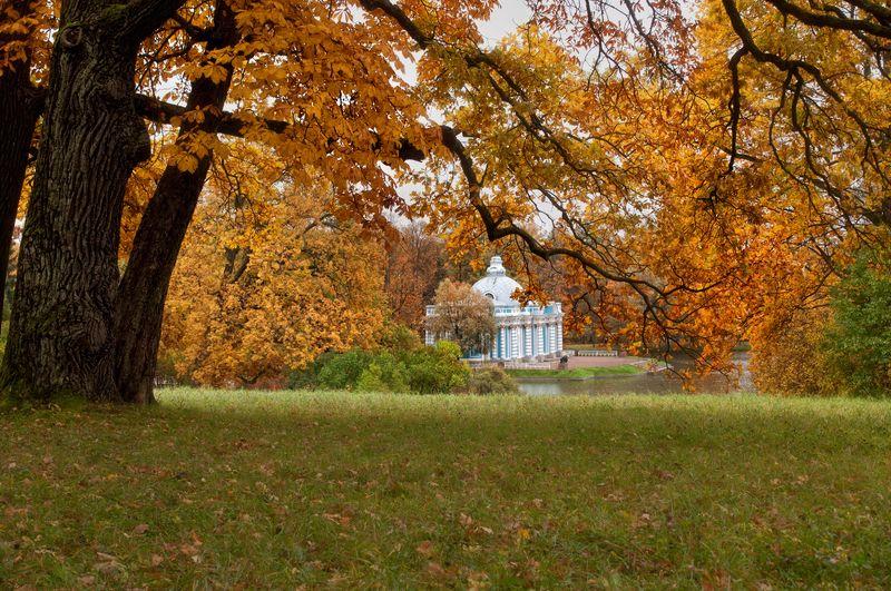 пейзаж,парк,осень,пушкин,царское село осенний парк...photo preview