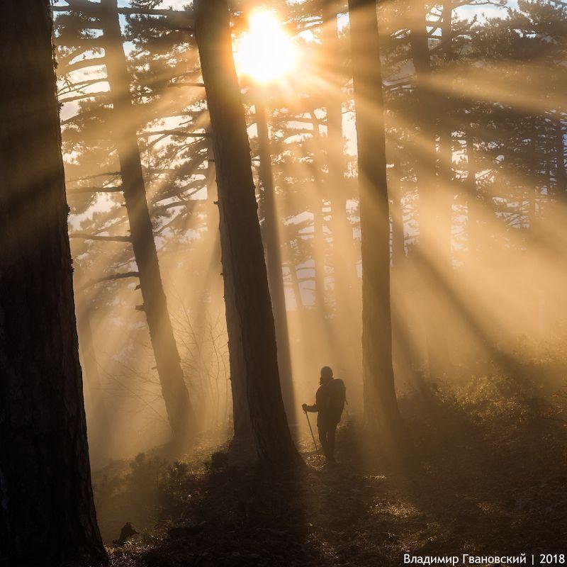 Золотой туманphoto preview