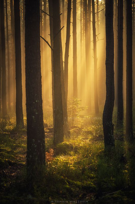 forest, poland, polish, landscape, mushroom, trees, light, awesome, shadows, fog, mist, beautiful, growing, life, sunrise, sunset, morning A new life фото превью