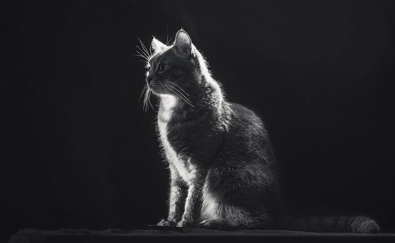 Про кошкуphoto preview