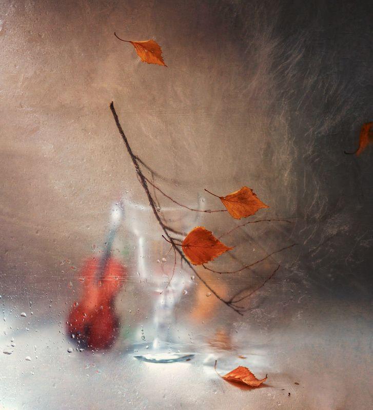 натюрморт, полиэтилен, осень, скрипка, дождь А одинокой скрипки звуки..photo preview
