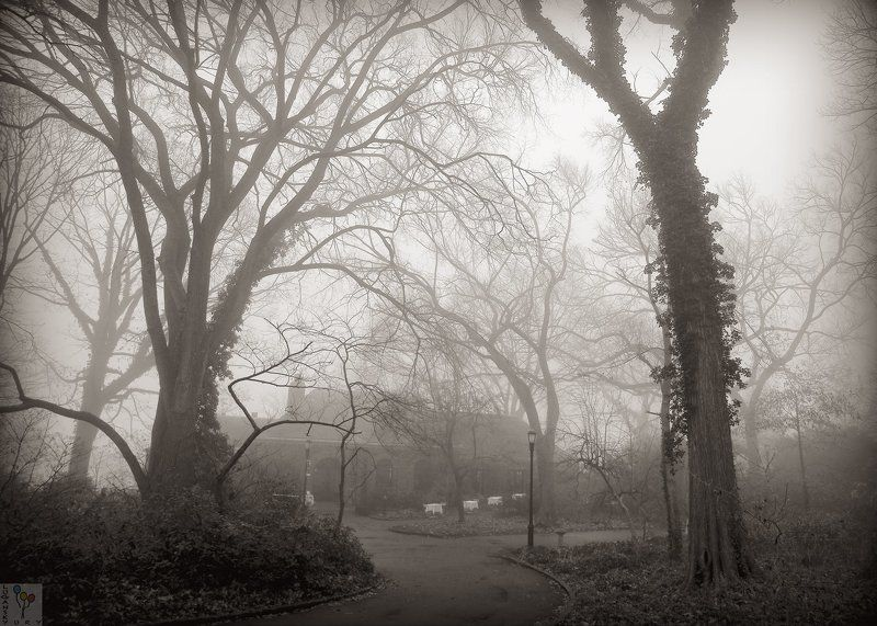 new york, Туман в старом паркеphoto preview