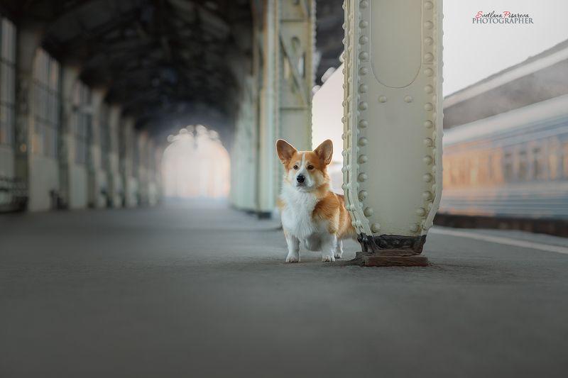 На вокзалеphoto preview